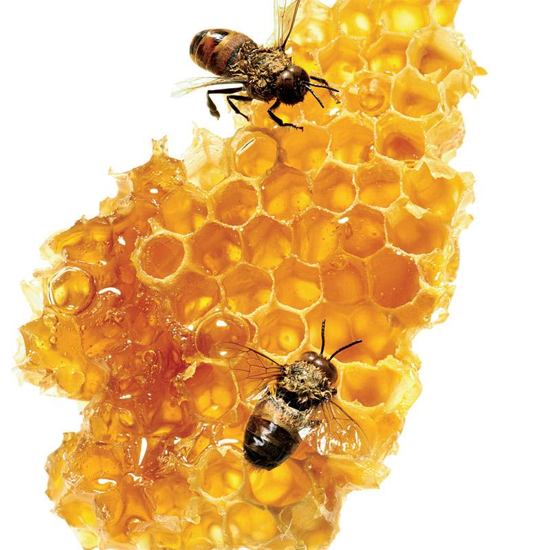 กลิ่น Honey Fragrance (น้ำผึ้ง) 30ml.**