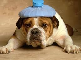โรคปวดศีรษะจากความเครียด เป็นสาเหตุที่พบได้มากที่สุดของผู้ที่มีอาการปวดศีรษะ มักจะมีอาการปวดศีรษะต่อเนื่องนานเป็นวันๆ จนถึงเป็นสัปดาห์ หรือเป็นแรมเดือน โดยจะปวดพอรำคาญ หรือทำให้รู้สึกไม่สุขสบาย และจะปวดอย่างคงที่ ไม่แรงขึ้นกว่าวันแรกๆ ที่ปวด จัดว่าเป็นโรคที่ไม่มีอันตรายร้ายแรงแต่อย่างใด แต่จะเป็นๆ หาย ๆ เรื้อรัง