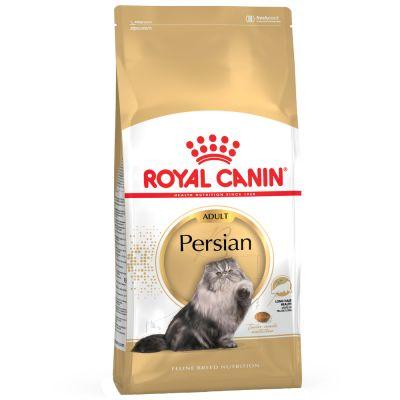 Persian แมวโต พันธุ์เปอร์เซีย