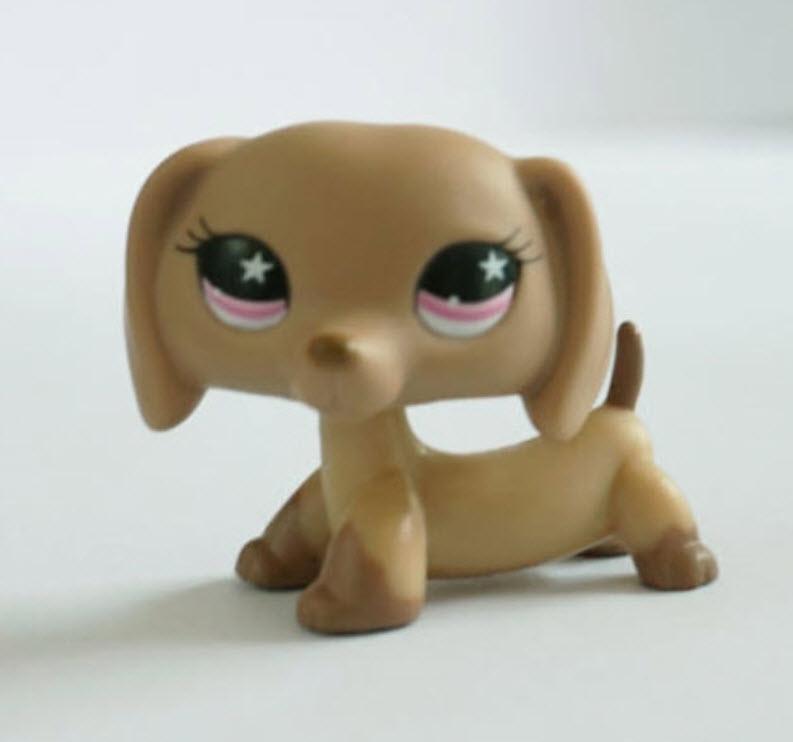 สุนัขดัชชุนด์ สีน้ำตาล ตาสีม่วง #932